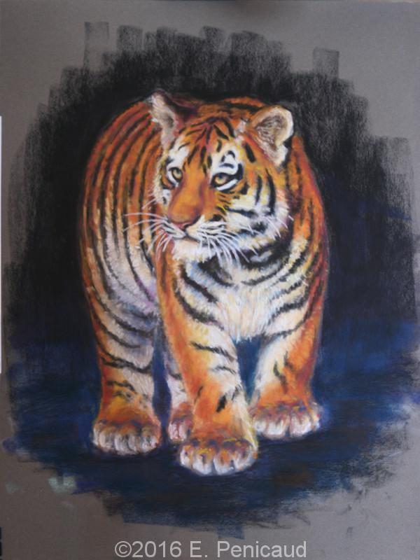 Tigre. Pastel sec.