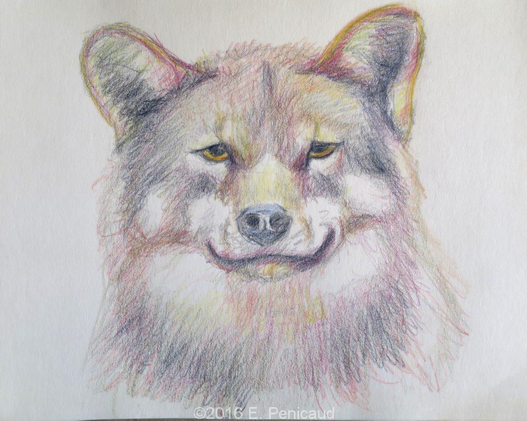 Loup. Crayons de couleurs.