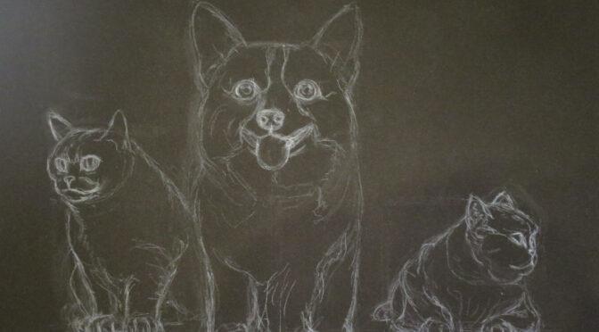 pas a pas: chats & corgi – dessin préparatoire
